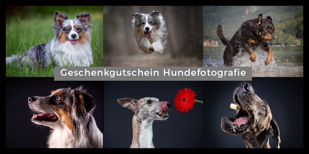 Geschenkgutschein Hundefotograf